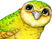 Poko the Kakapo